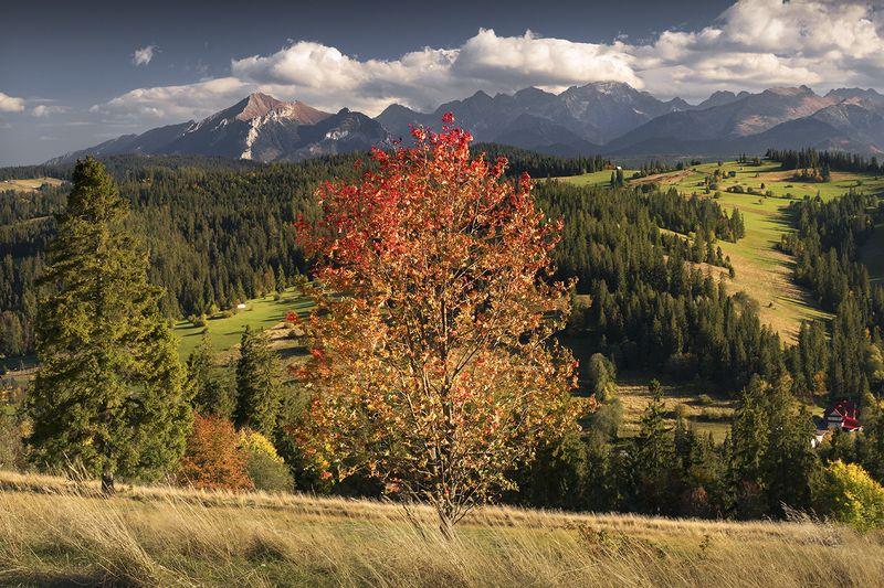 Autumn in the Tatra Mountainsphoto preview