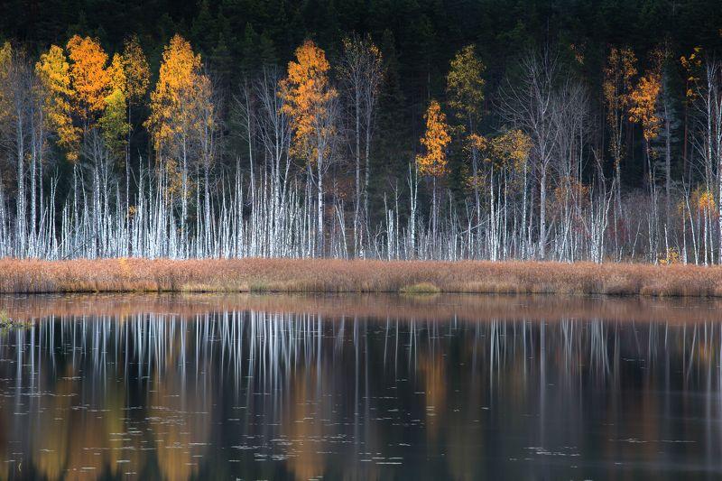 болото, кайф, рассвет ,север ,солнце, свет, закат, облака, отражение, фототур, осень, отражение Танец Октябряphoto preview