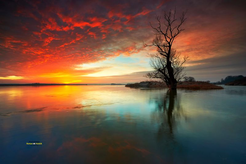 river, landscape, sunrise water, tree, lonely tree, By the riverphoto preview