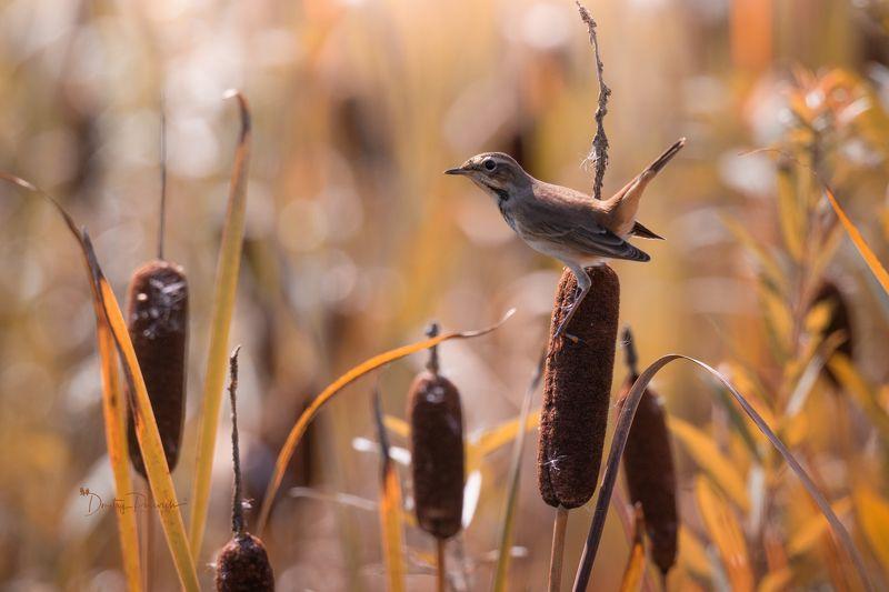природа, лес, поля, огороды, животные, птицы, макро Последние тёплые дниphoto preview