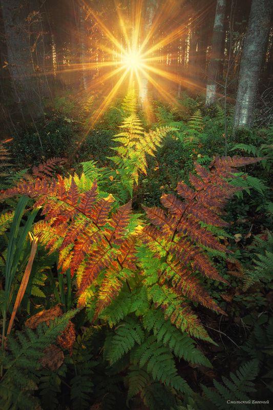 папоротник, лес, осень. Осенний лесphoto preview
