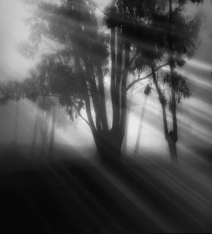 #tree #blackandwhite #fog #landscape Fogphoto preview
