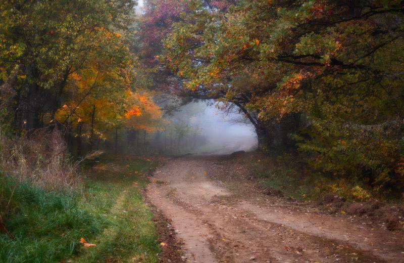 осень, дорога, туман, деревья, Октябрь в лесуphoto preview