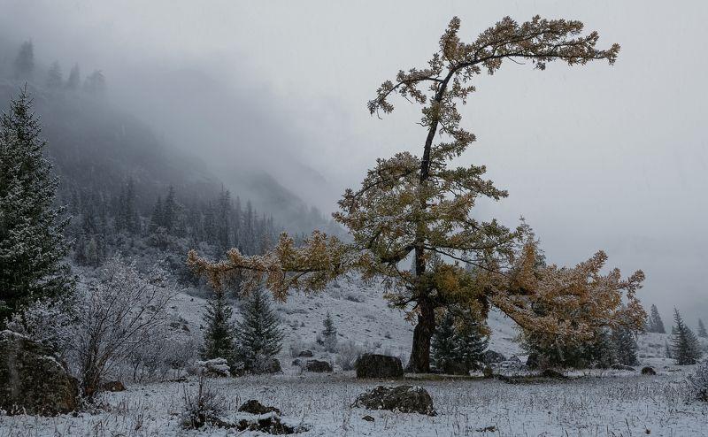 Зима на пороге.photo preview