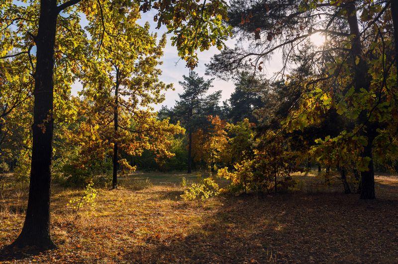 лес, осень, октябрь, вечер, дубы Тепло уходящего солнцаphoto preview