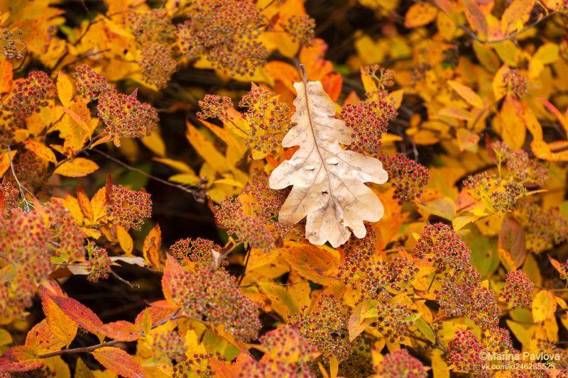 абстракция, золотая осень, осенние листья, парейдолия, осенняя текстура, осень, осенний парк, мир визуальных ассоциаций, nikon \