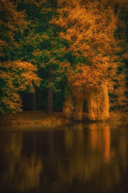 золотая осень, gold autumn, природа, пейзаж, landscape, nature ***photo preview