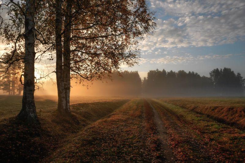 павловскийпарк, павловск, павловский, пейзад, рассвет, туман Рассветы осени...photo preview