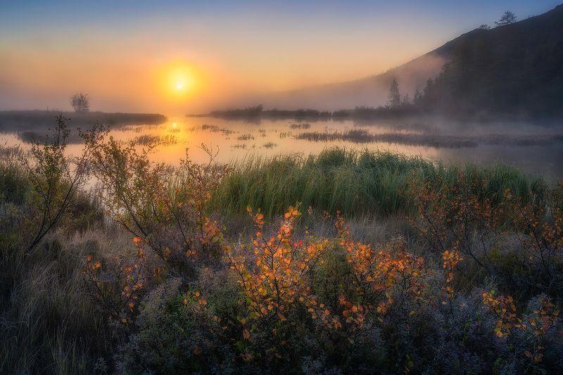 Туманное утро фото превью