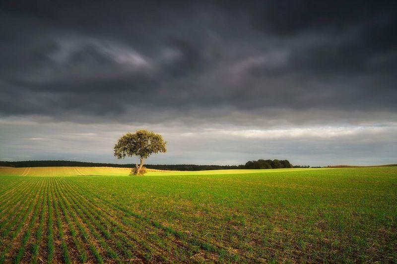 autumn, oak, field, cloud, sun, green, tree, one, september Oakphoto preview