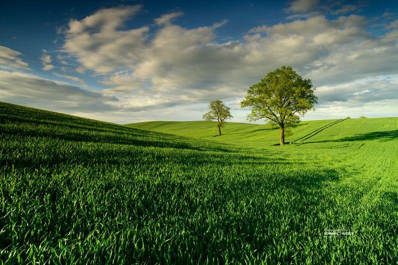 Green spring, landscape, spring, green fields, clouds, sky Green spring. фото превью