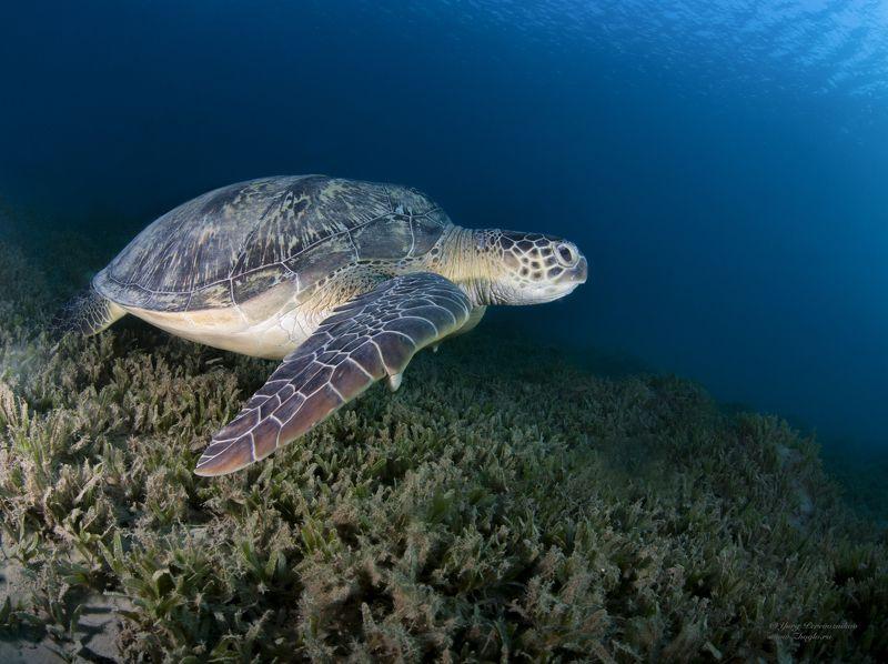 подводное фото подводный мир хургада египет жогло zhoglo красное море Где ключик золотойphoto preview