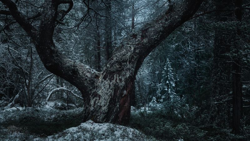 forest,woodland,woods,norway,boreal,noregian,nature,winter,night,blue hour, Deep in the forest фото превью