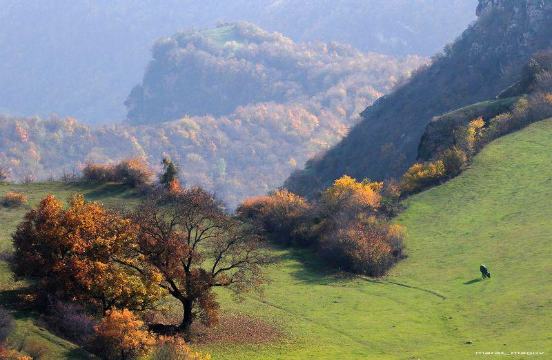 осень,горы,дагестан, осень в горах..photo preview