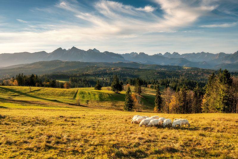 Polska, Poland, landscape, krajobraz, outdoor, nature, morning, goldenhour, autumn, clouds Tatara Mountainsphoto preview