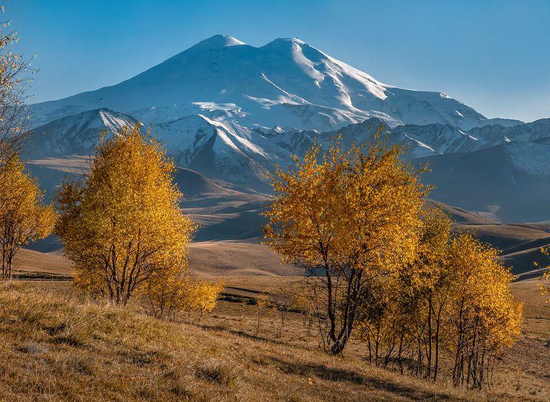 кавказ, джилу – су, эльбрус, кавказский хребет, осень, путешествие, горы, горное, дорога, туризм, национальный парк приэльбрусье, берёза, дерево, осенний, синий, золотой, Эльбрус и золотые берёзыphoto preview
