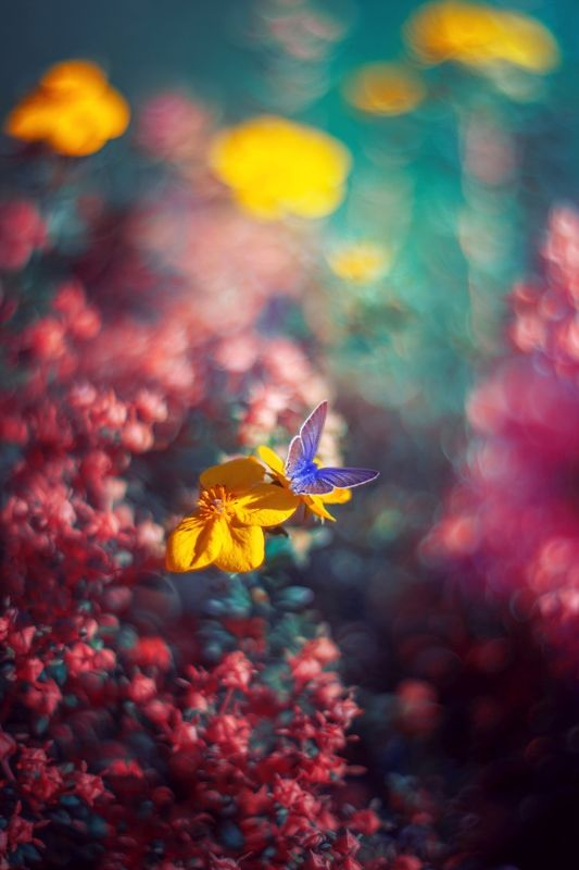 flowers,butterfly,nature,pink,blue,red,nikon,bokeh,zenit,helios,exterior, Yellowphoto preview