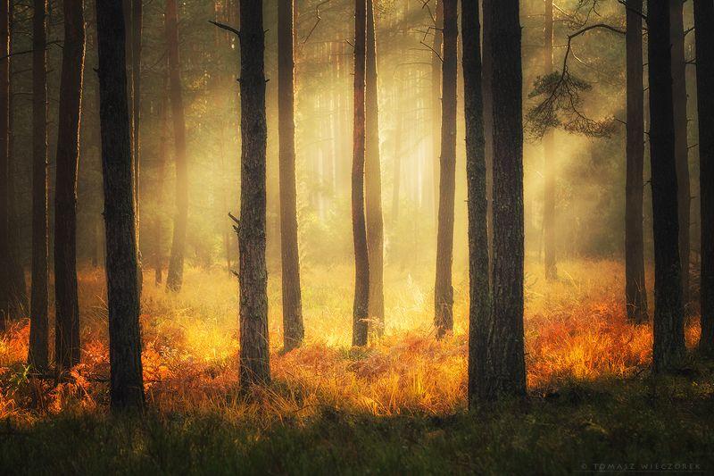 landscape, poland, light, autumn, awesome, amazing, sunrise, sunset, lovely, nature, travel, forest, trees, orange, shadows The light фото превью