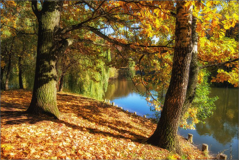 москва, осень, парк, пруд Осень в Царицыноphoto preview