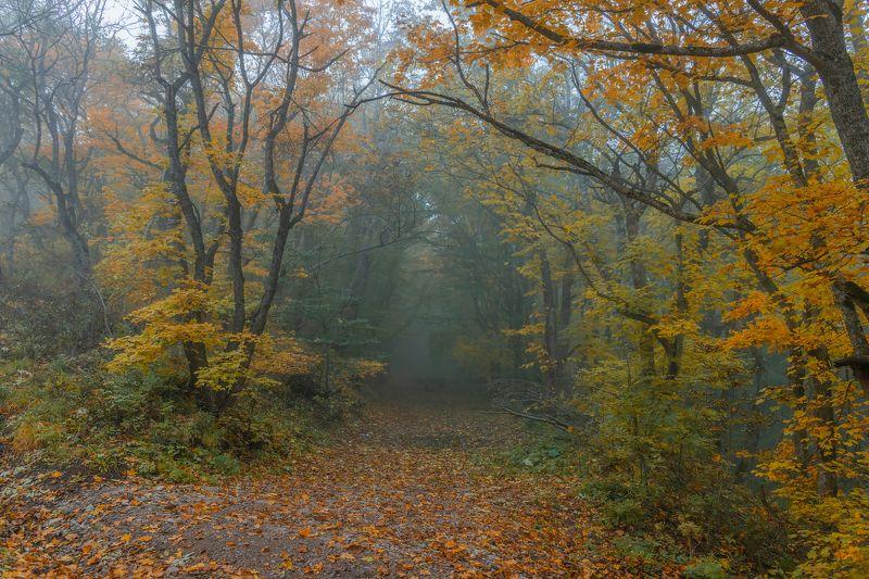 утро,туман,лес,природа,пейзаж Утро туманноеphoto preview