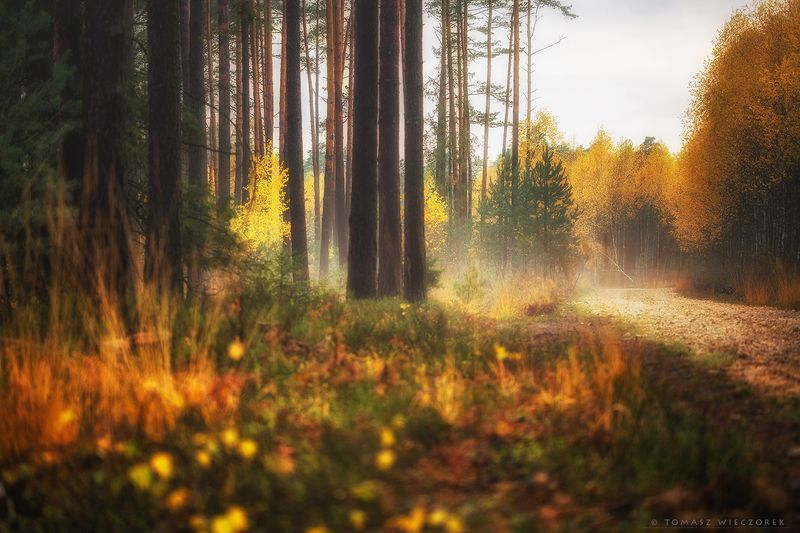 landscape, poland, light, autumn, awesome, amazing, sunrise, sunset, lovely, nature, travel, forest, trees, orange, road, colors Along the trackphoto preview