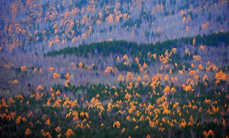 Осенний сонphoto preview