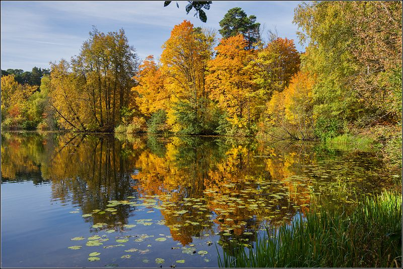 москва, осень, озеро, лес Осеньphoto preview