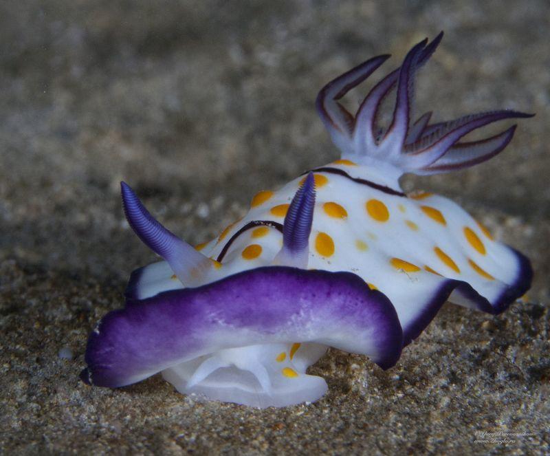 подводное фото подводный мир хургада египет жогло zhoglo красное море С фиолетовой каймойphoto preview
