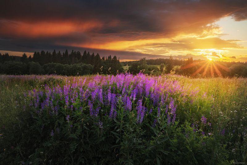 закат, лето, поле. Летний закатphoto preview