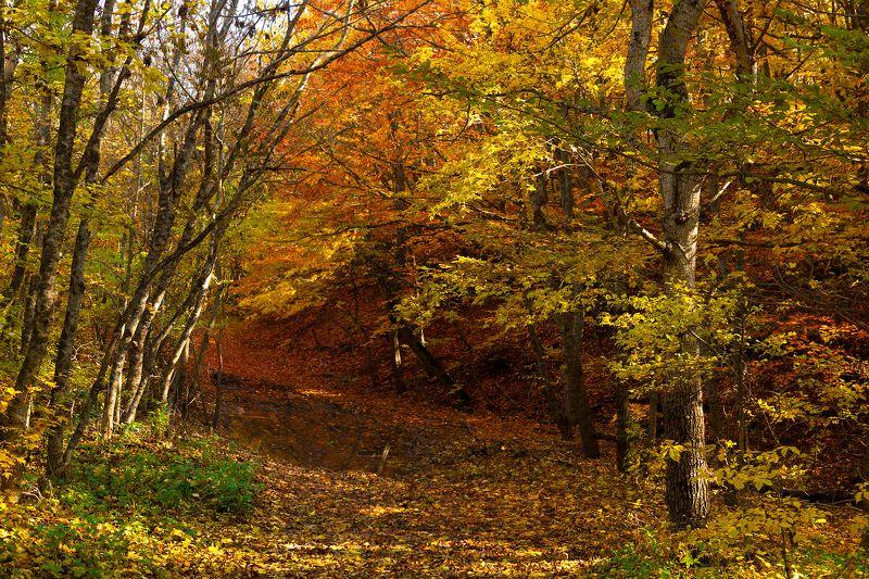 лес,осень,тропинка,природа,пейзаж,осенние листья Осенними дорожкамиphoto preview