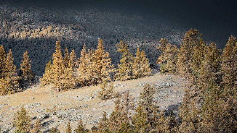 алтай,горы,снег припорошилоphoto preview