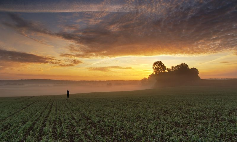 autumn, sky, field, morning, fresh, sunrise, poland, trees, mist, sunlight I\'mphoto preview