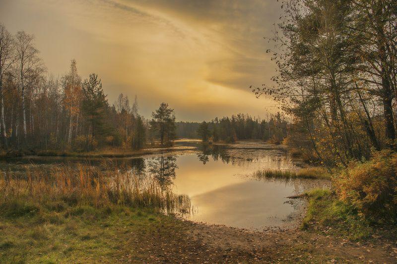 Лесное озероphoto preview