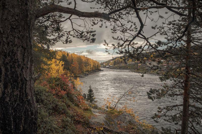 река, осень, село, сентябрь, желтый, умба, заполярье, кола, пейзаж, природа, путешествие Золотая осень на Умбеphoto preview