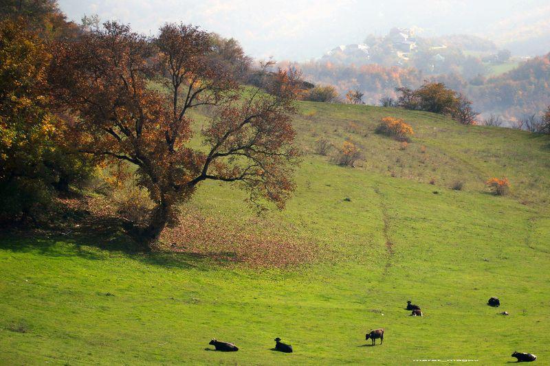 Осень в горах..photo preview