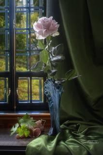 Натюрморт с розой у окна