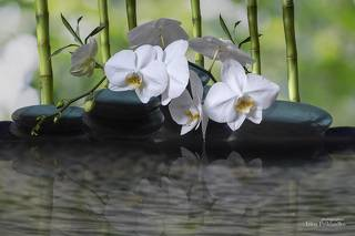 Натюрморт с орхидеей и бамбуком