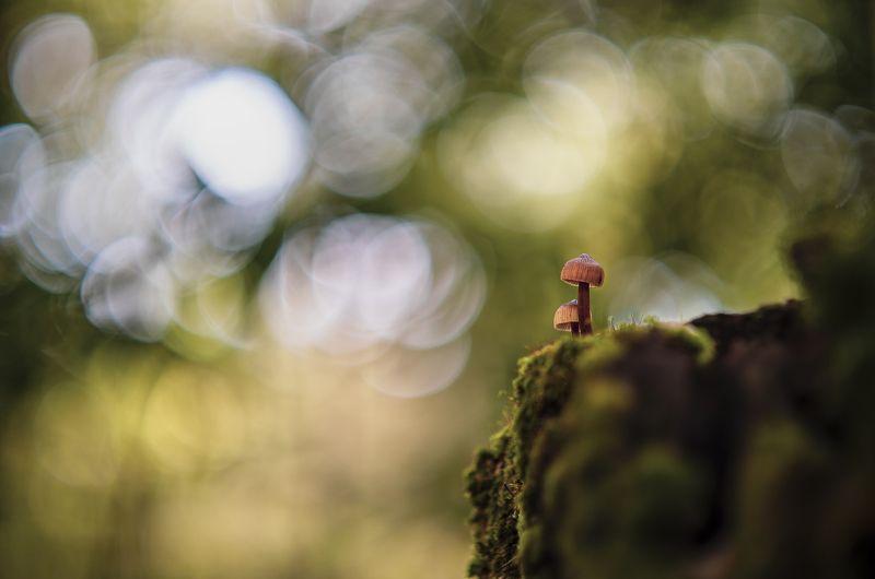 bokeh, nature, fungi, mushroom, macro Living on the edgephoto preview
