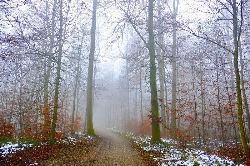 Landscapes, forest, Autumn, Fall, colors, snow, trees, nature, fog, mist, mood, осень, Дорога в осеньphoto preview