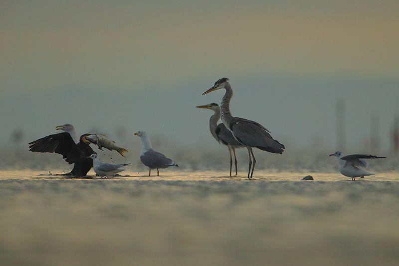 bird, wild,animals ,poland,katowice Серая цапляphoto preview