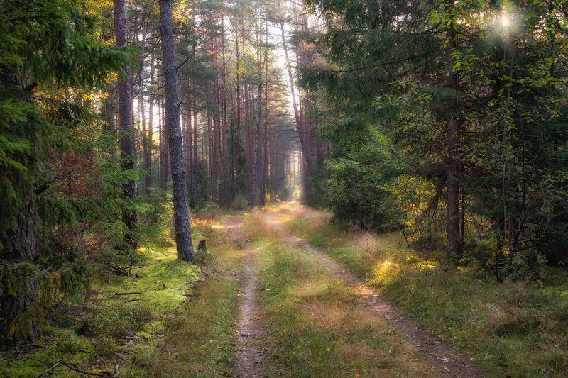 осень, лес, дорога, утро, Про солнечный лесphoto preview