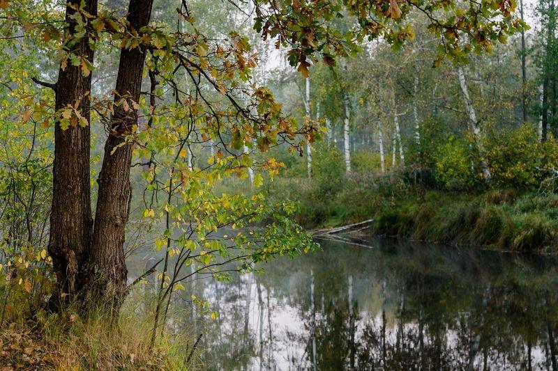 пейзаж, осень, туман, река, березки А на том берегу...photo preview