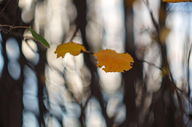 Осенняя графикаphoto preview