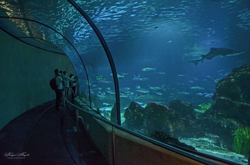 барселона, океанариум, интересно, подводный мир средиземноморья, путешествия Барселона, океанариумphoto preview