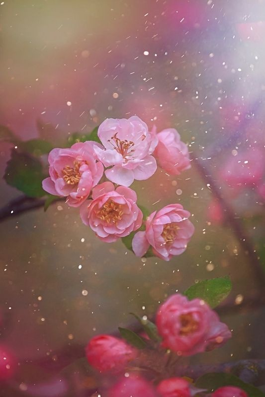 макро, macro, цветы, flowers, яблонь, весна, spring Вспоминая весну ...photo preview