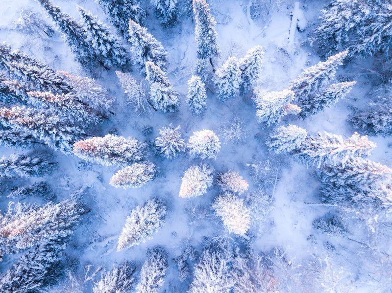 елки, зима, снег, квадрокоптер Елки в снегphoto preview