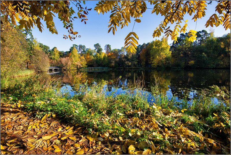 москва, осень, озеро, лес, отражение *  *  *photo preview