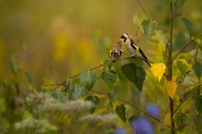 природа, лес, поля, огороды, животные, птицы, макро Полдник в ясляхphoto preview