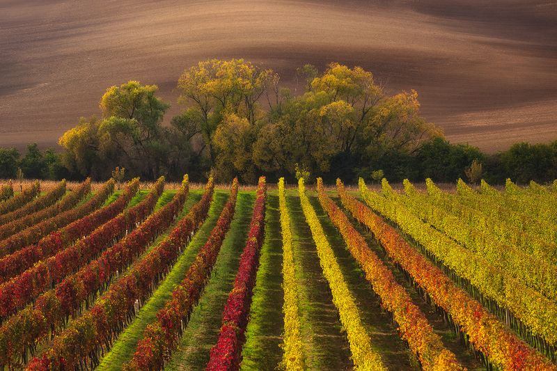 Moravian autumnphoto preview