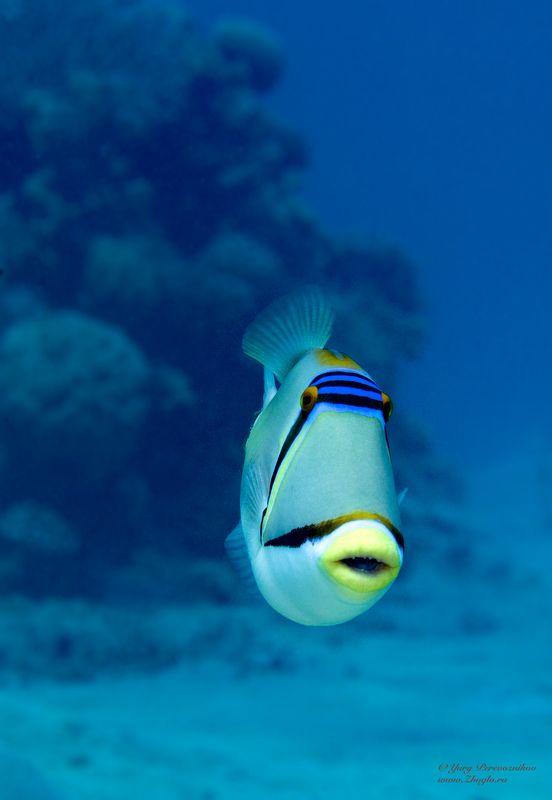 подводное фото подводный мир хургада египет жогло zhoglo красное море Губки трубочкойphoto preview